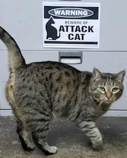 """""""FENDER"""" THE CAT"""