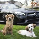 Mercedes-Benz of Henderson and NSPCA