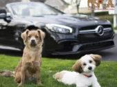 Fletcher Jones Sponsors Nevada's SPCA