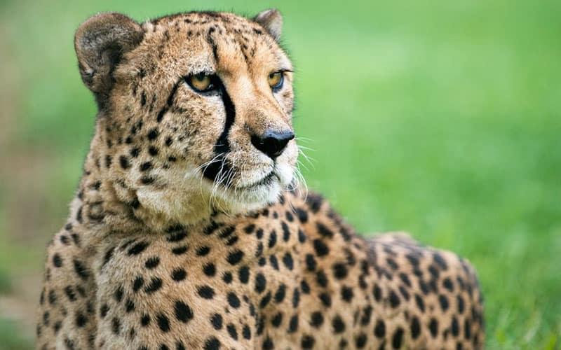 Columbus Zoo Heart of Africa Region