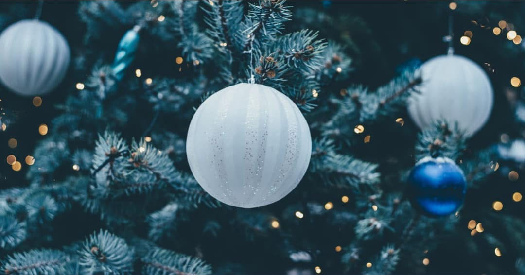 Christmas Trees on Long Island