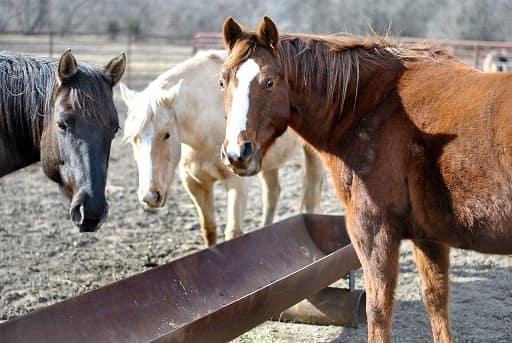 Marty Kane's Horses