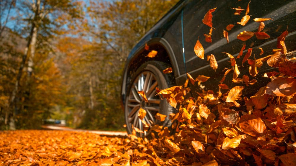 Top Fall Car Services