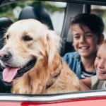 A golden retriever, who is being a very good boy, in the car with a happy family