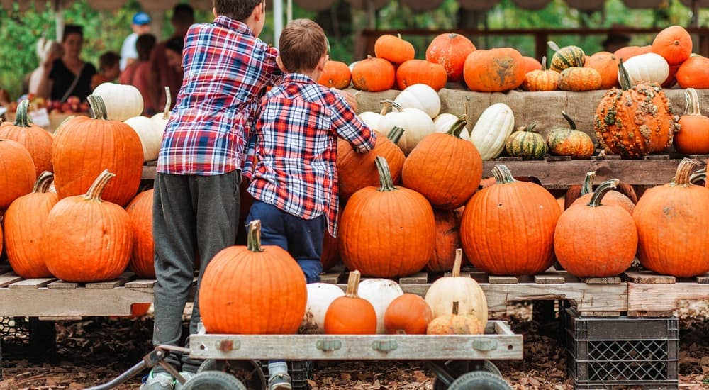 Kids are looking at pumpkins at a stand. Check out these fall events after looking at Jeeps for sale in Colorado Springs.