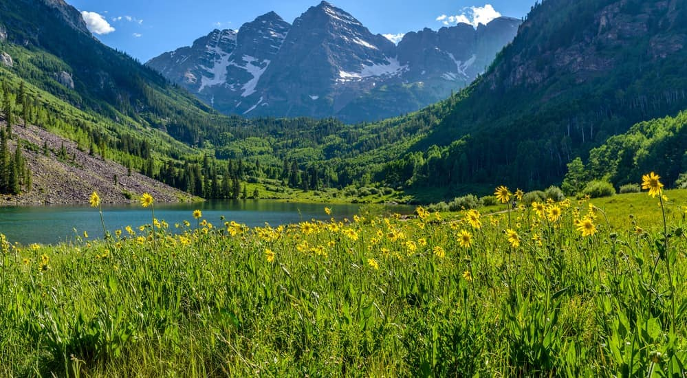 Yellow wildflowers are shown in a valley near Colorado Springs, CO, on a spring day.